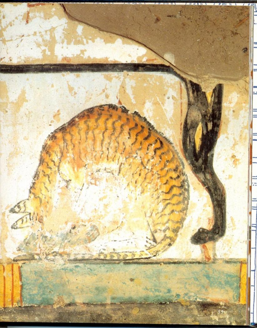 cat eating a fish under Tawi's chair 1400BC