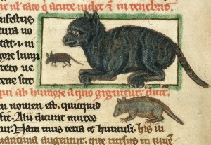 Peraldus-England Cat after1236 Harley3244f.49vBritishLibrary, Cat in Middle Ages Manuscripts