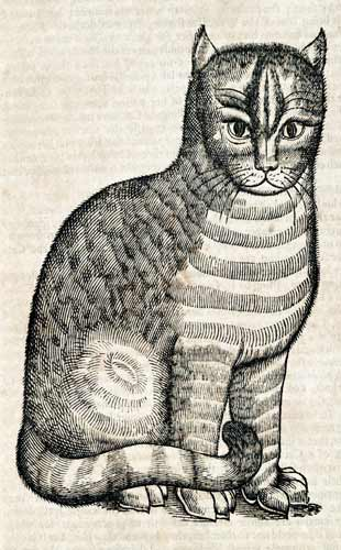 Cat From Edward Topsell's Four Footed Beasts