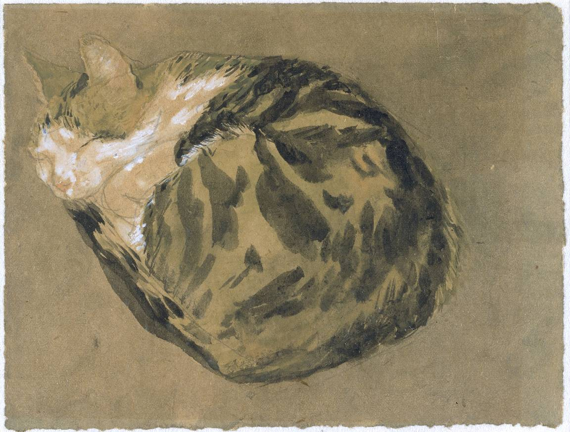 Cat Gwen John Graphite and Watercolor on paper 1904-08 Tate