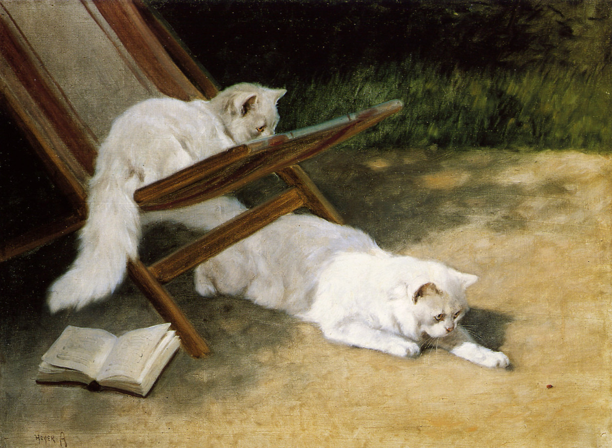 Persian Cats Private Collection