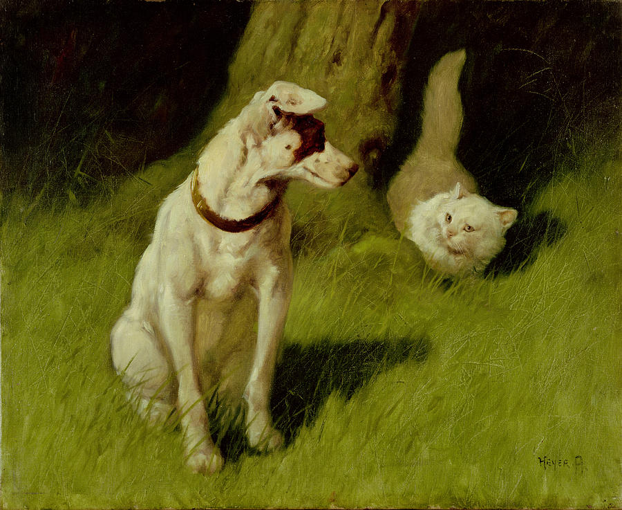 White Persian Cat and Jack Russell Private Collection