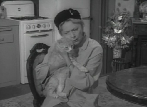 miss paisley's cat, cats in film