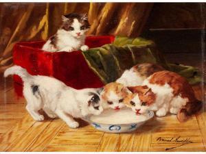 Junge Katzen an Einem Milchnapf