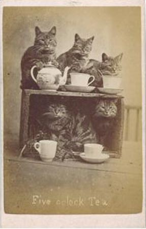 Five O'Clock Tea Harry Pointer cats in vintage photographs