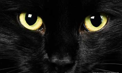 halloween and black cats, samhain