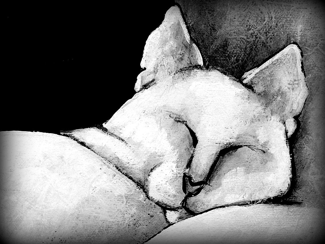 Bliss Sleeping Carla Raadsveld, cats in art
