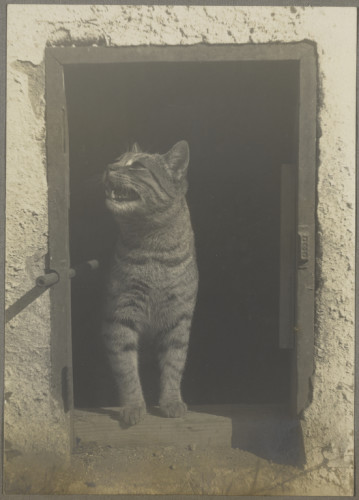 Weston Cat Standing in Cat Door Courtesy of Arizona Board of Regents, Center for Creative Photography