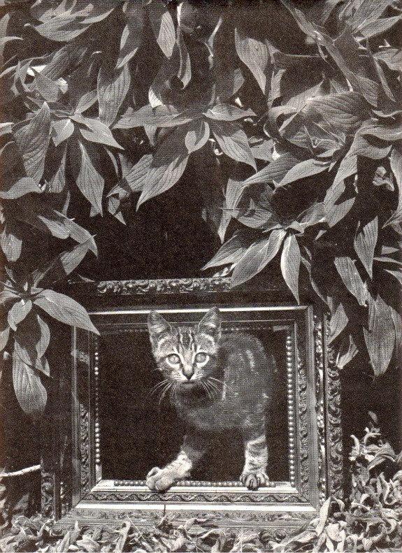 Weston, cat 1945