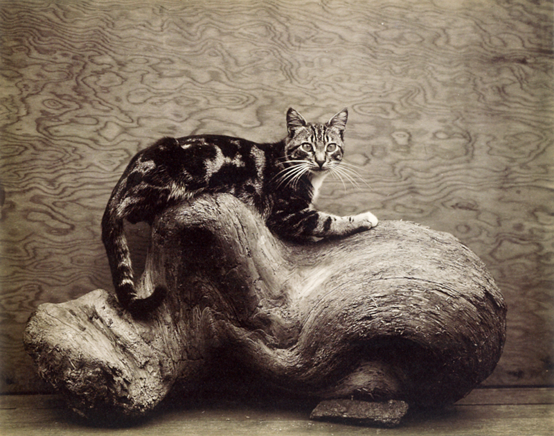 Edward Weston, Johnny