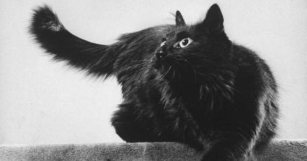 Blackie, Gjon Mili 1940's, cats in photos, cats in art, art cats