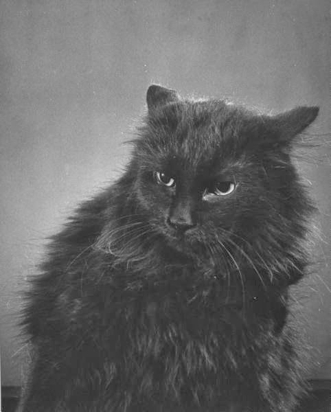 G Mili's cat Blackie, photos of cats
