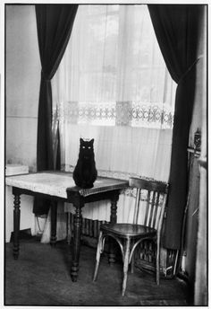 Cat on a Table 1964 Cartier-Bresson