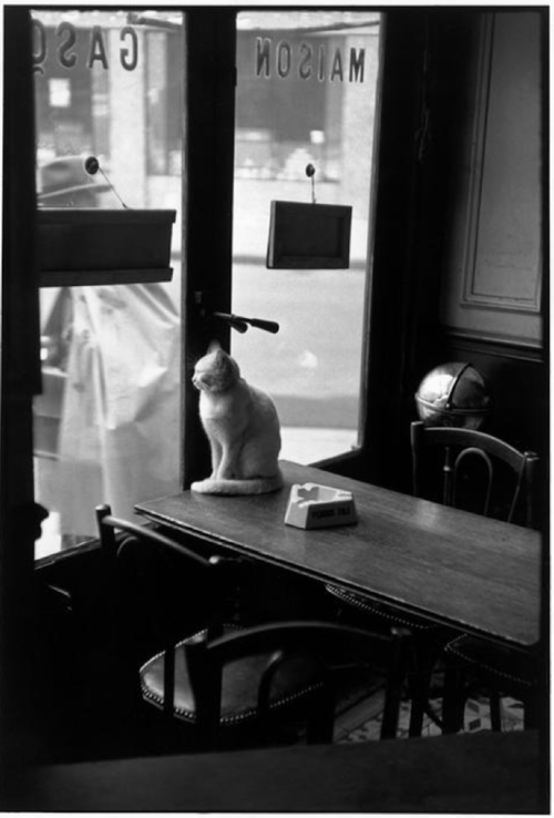 Cat in a cafe Henri Cartier-Bresson, 1953