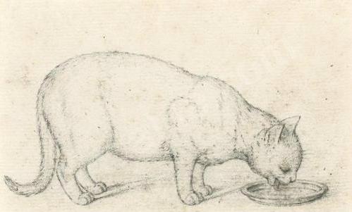 Gottfried Mind Cat drinking milk