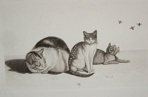 Gottfried Mind Cat,kittens and flies