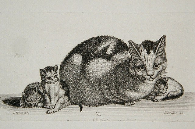 Gottfried Mind mother and kittens 6