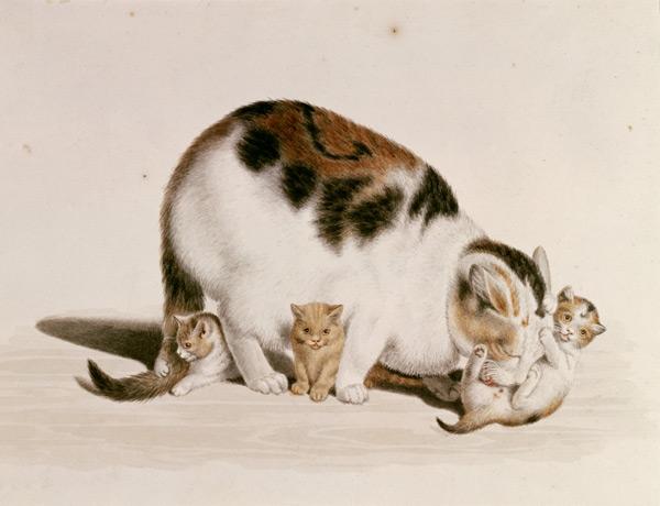 Mind, Katze-mit-drei-Jungen