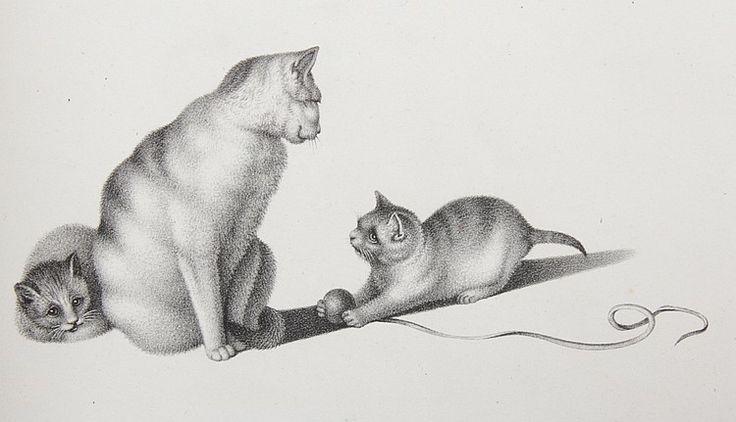 mind-cats-3