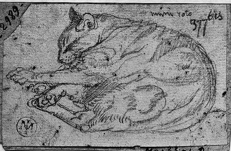 Le Chat Mimi-Roto couché