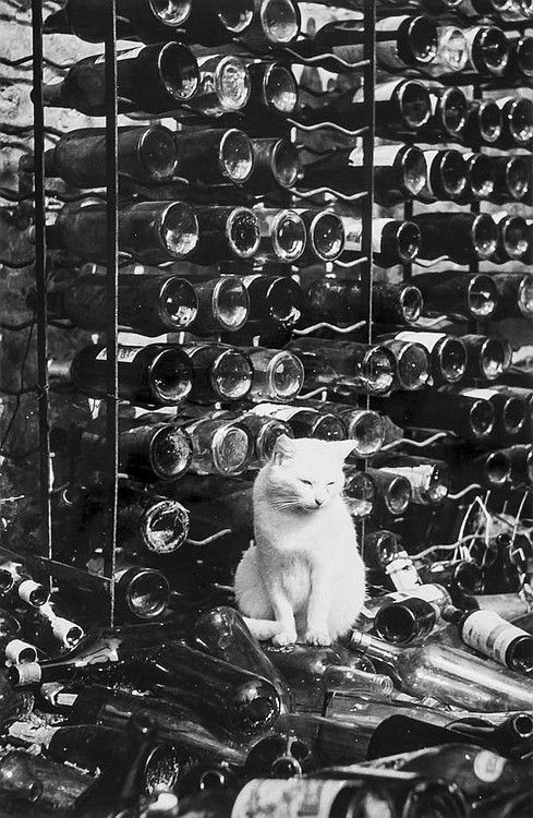 cat and bottles 1938