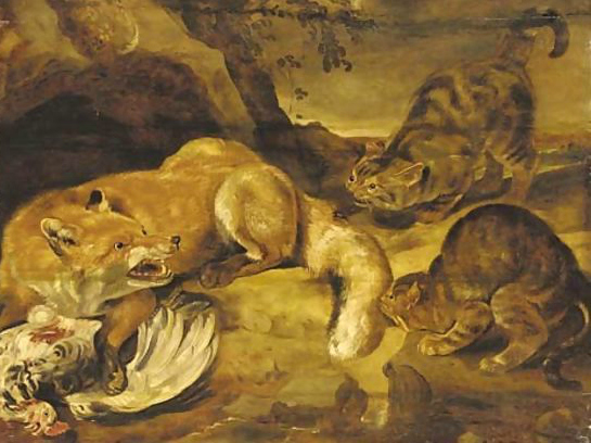 F Snyders A Fox Defending its Kill from Wild Cats