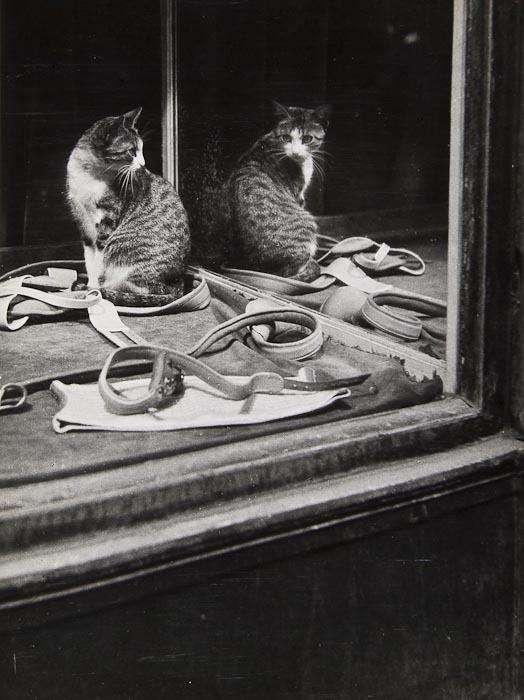 Untitled cat in window 1930