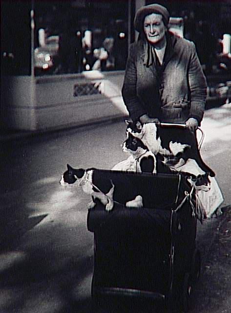 cat photography, Brassai