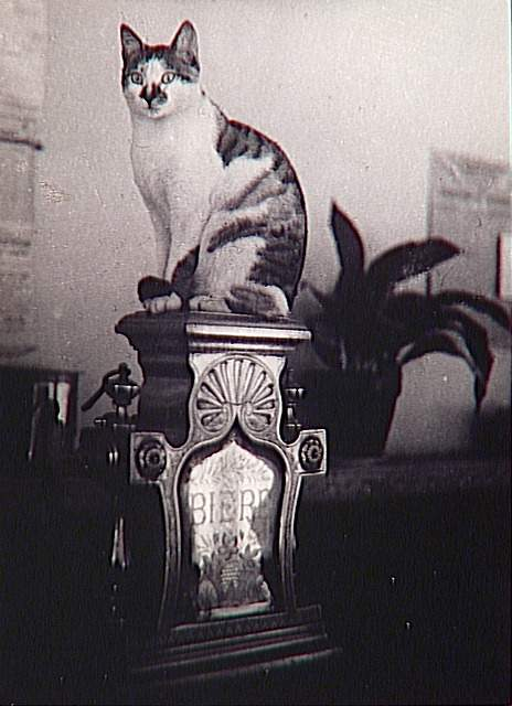 Bistrot Cat 1944 cat photographs