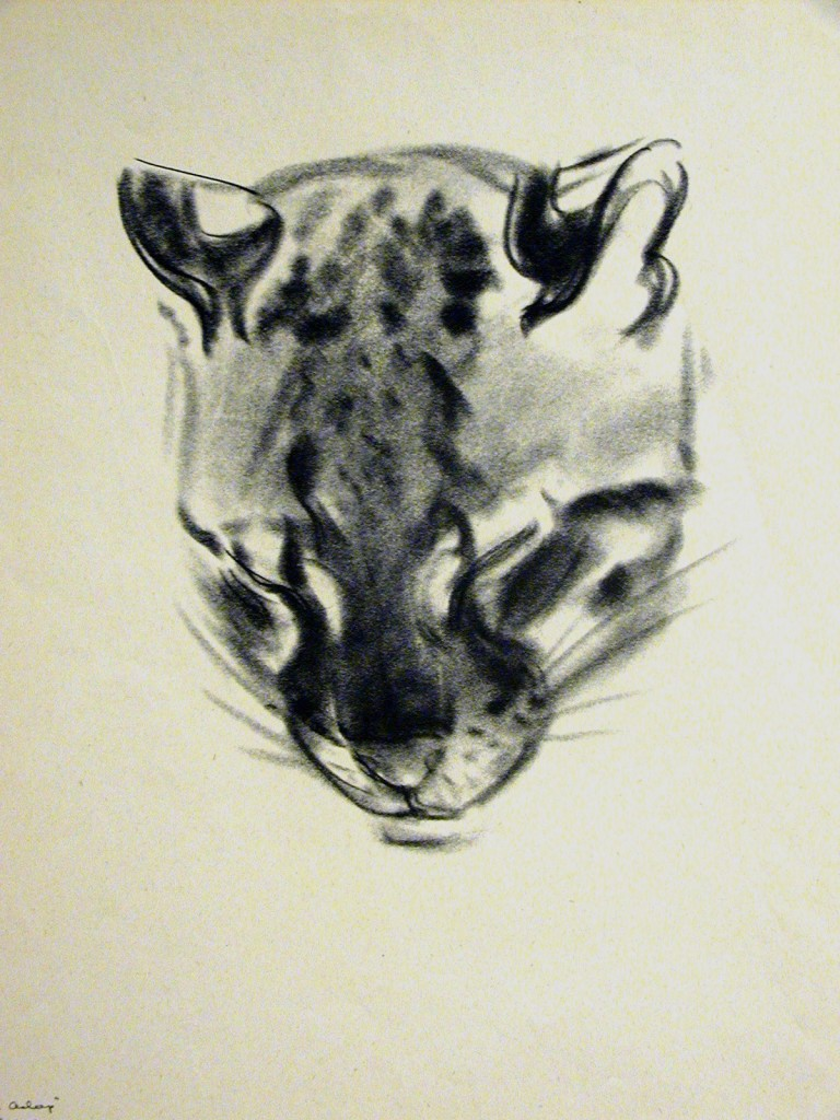 Pounce the Ocelot Sleeping, C. Turlay Newberry