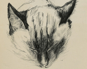 Siamese Cat Head, C. Turlay Newberry