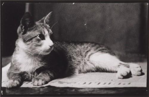 Mrs. Thomas Eakins's Cat, ca. 1880-90
