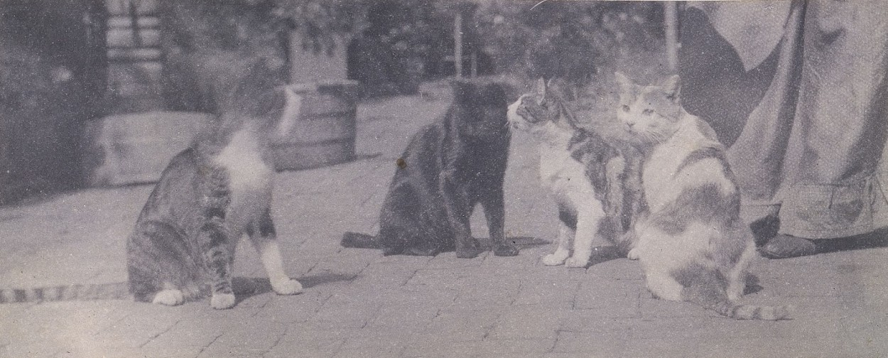 Thomas EAKINS. Four Cats. c. 1895. Platinum print Metropolitan Museum of Art