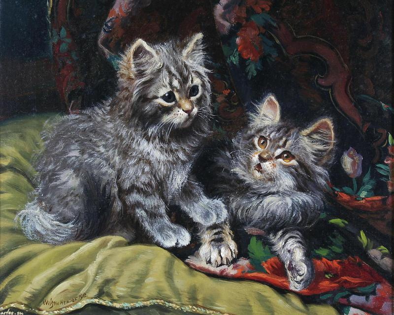 Two grey kittens Wilson Hepple