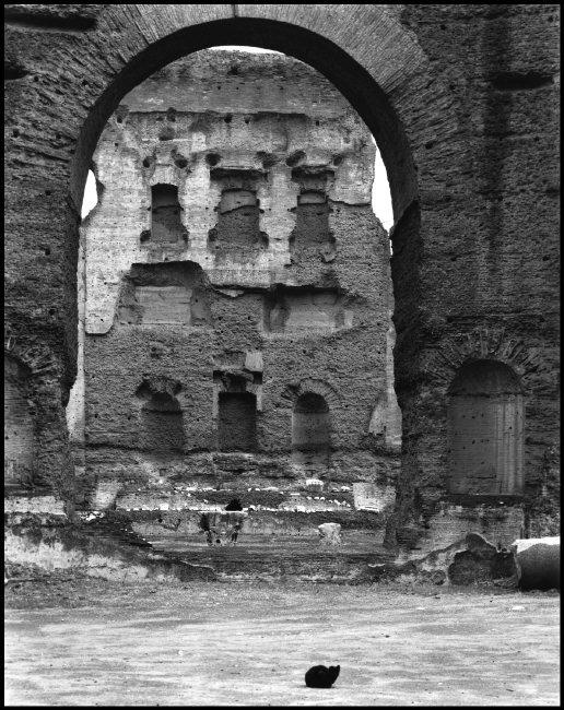 Black Cat, Rome 1959, Elliott Erwitt