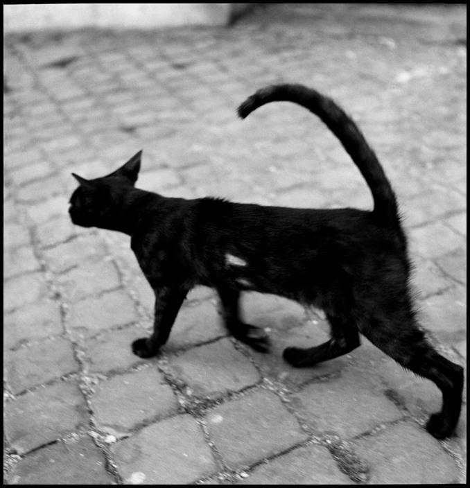 Black Cat, Venice 1949, Elliott Erwitt