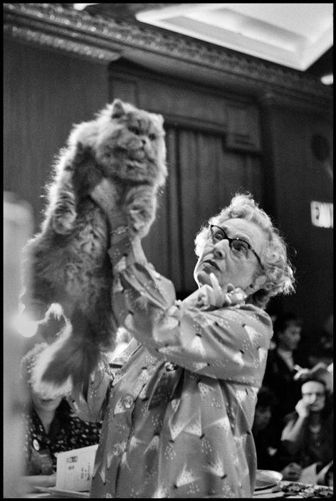 Cat Show, NYC 1953, Elliott Erwitt