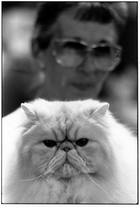 Cat Show, USA 1990, Elliott Erwitt