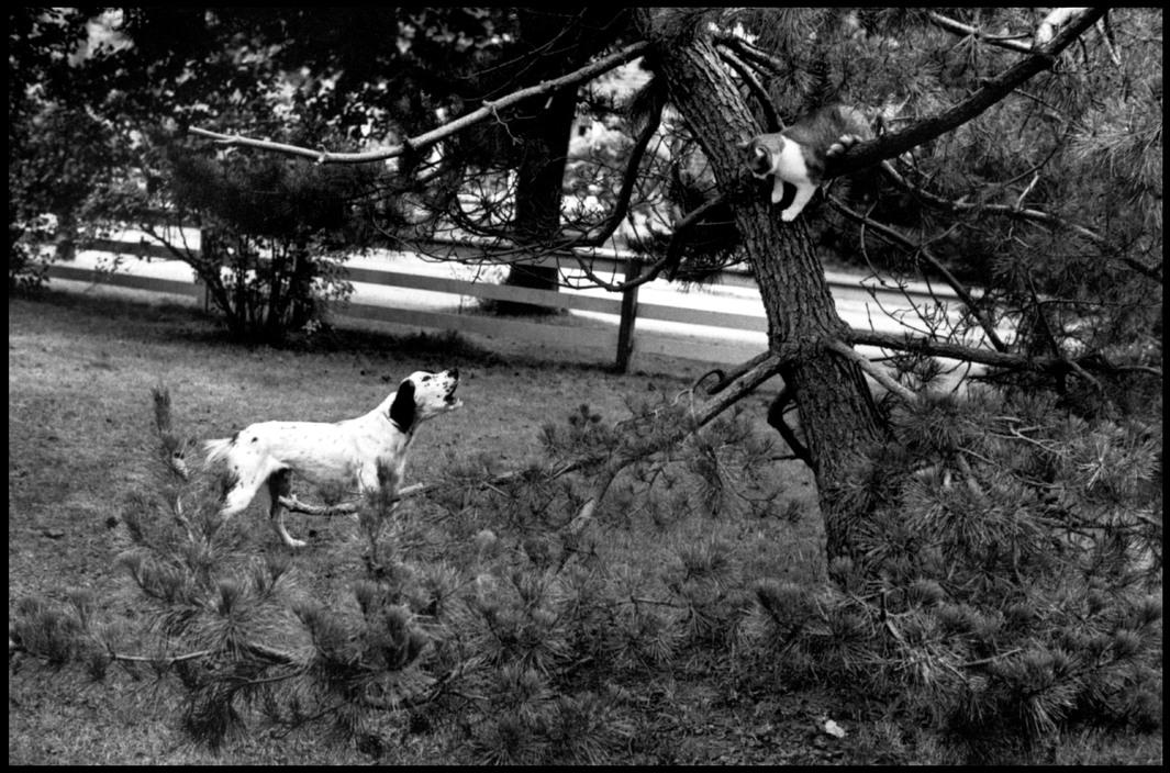 Elliott Erwitt Dog and Cat Long Island, New York. 1969
