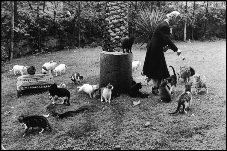 Woman Feeding Stray Cats, Rome 1959a, Elliott Erwitt