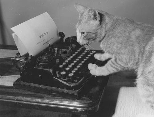cat typing at a typewriter, cat stories, stories about cats