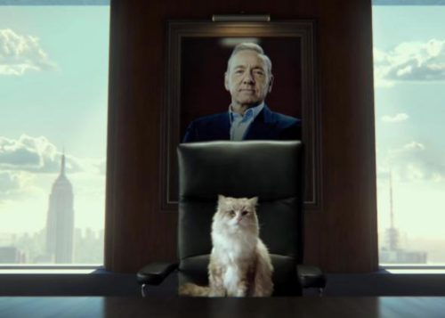 Cats in Film -- Nine Lives (2016) with Kevin Spacey and Mr. Fuzzypants, cat films