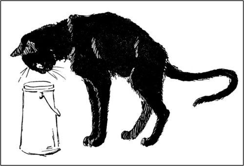 Des chats, Theophile Steinlen