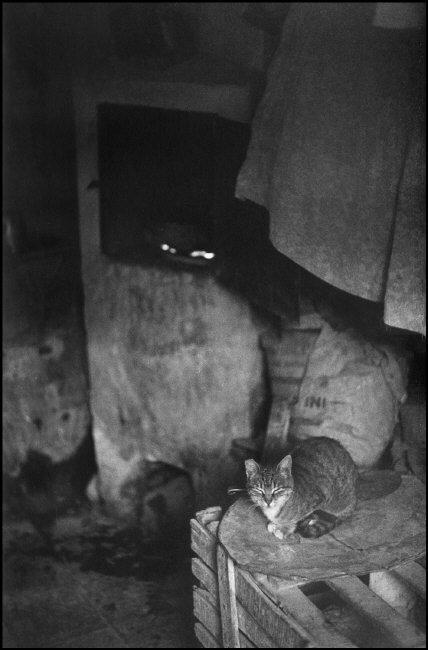 1964 ITALY, Sicily,Isnello Cat in a poor house, Ferdinando Scianna