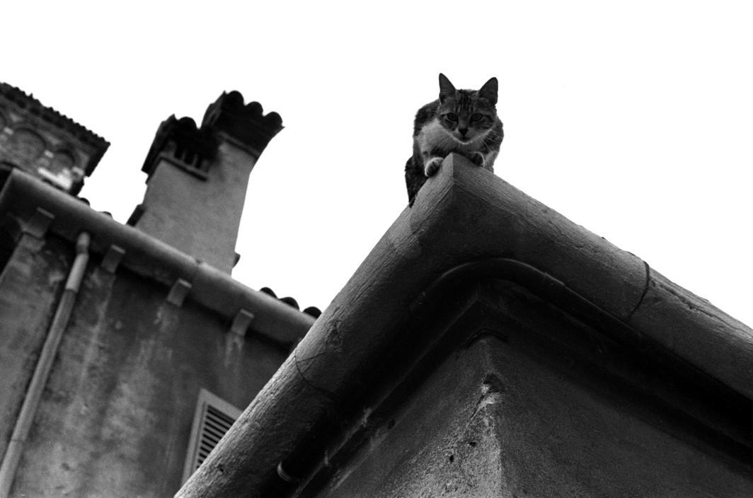 1984 Venice the cat on the roof, Ferdinando Scianna