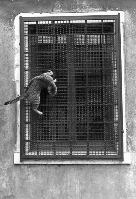 Cat Climbing a Window, Ferdinando Scianna, 1984
