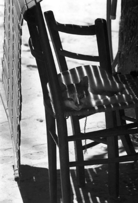 Cat on Chair, Ferdinando Scianna 1976