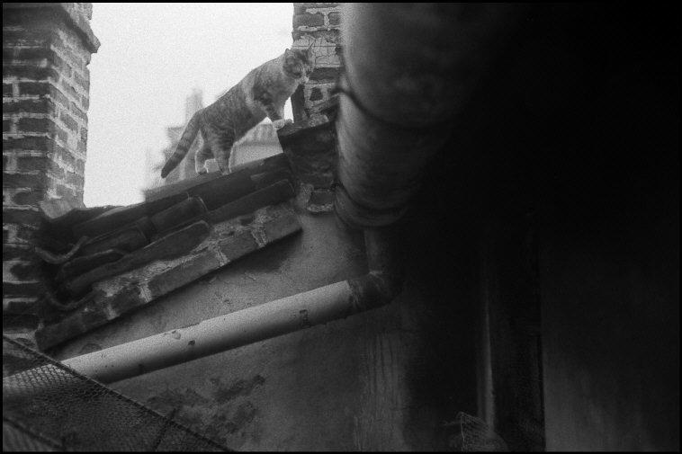 Cat on a Roof, 1982 Milan Ferdinando Scianna