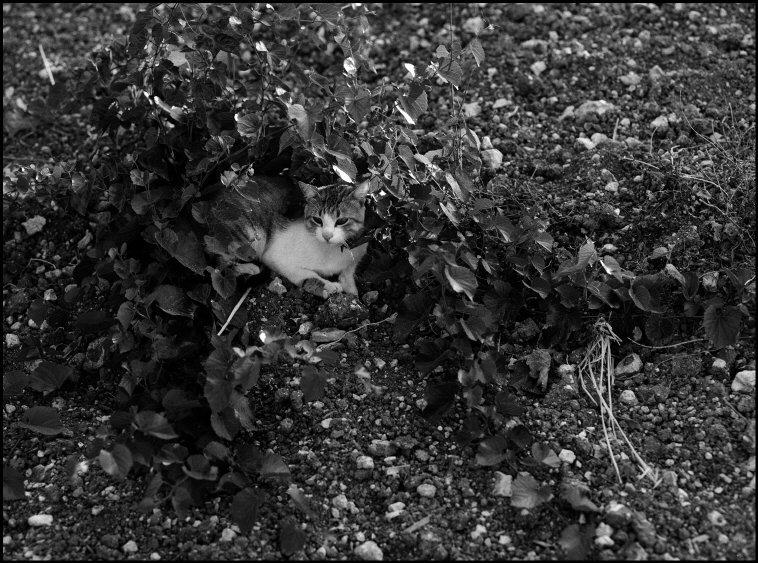 Cat who wanted to be a Dog, 1977 Ferdinando Scianna