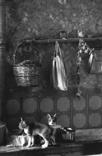 Cats in a Kitchen, Ferdinando Scianna 1980